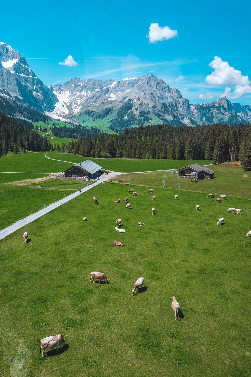 Europe Virtual Tour: Cows and mountains in Switzerland